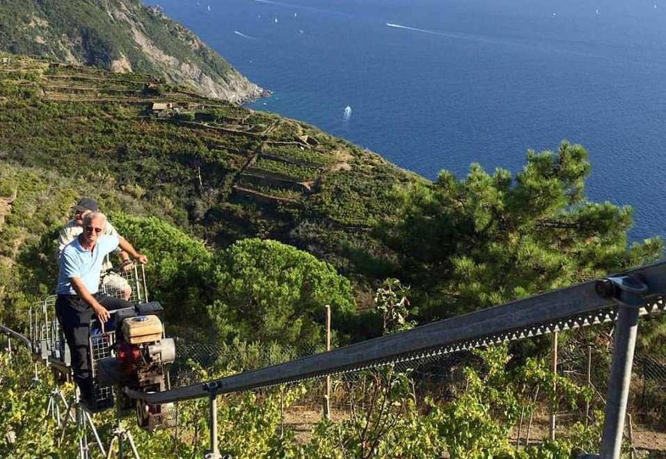 Agricoltura, Infocamere: -0,6% in Liguria, regione divisa a metà ...