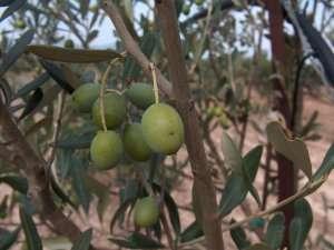 Agricoltura: Open innovation per creare valore e competere sul mercato @ azienda agricola Nirp International